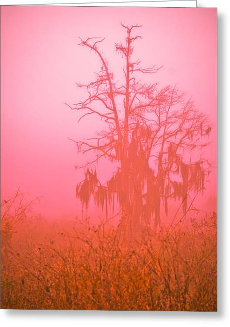 Bare Trees Greeting Cards - Here I Stand Greeting Card by Carolyn Marshall
