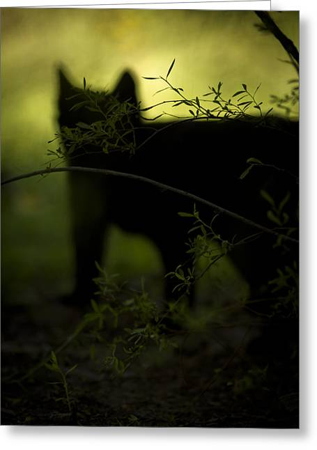 Here Kitty Greeting Cards - Here Kitty K i t t y Greeting Card by Kim Henderson