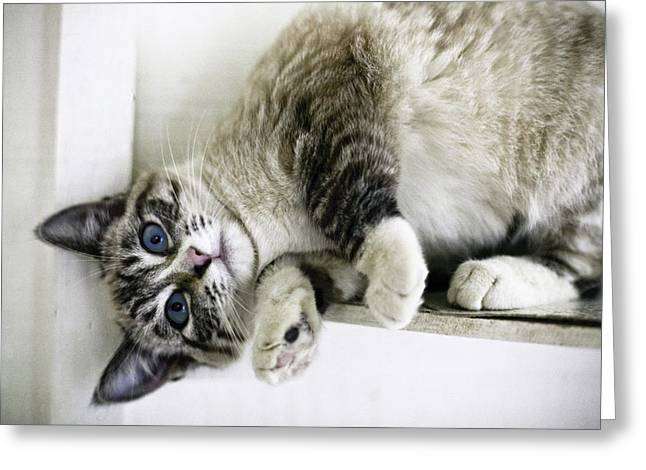 Cute Kitten Greeting Cards - Heres Lookin At You Greeting Card by Lynn Andrews