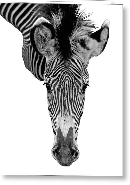 Jerry Mcelroy Greeting Cards - Heres Looking at You Greeting Card by Jerry McElroy