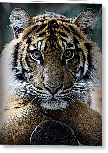"""animal Photographs"" Greeting Cards - Heres Looking At You Greeting Card by Tam Graff"
