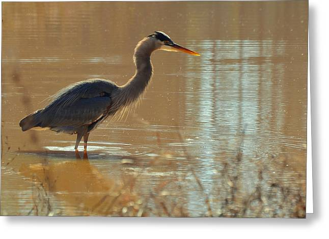 Crane Greeting Cards - Heron After Drying - c3213g Greeting Card by Paul Lyndon Phillips