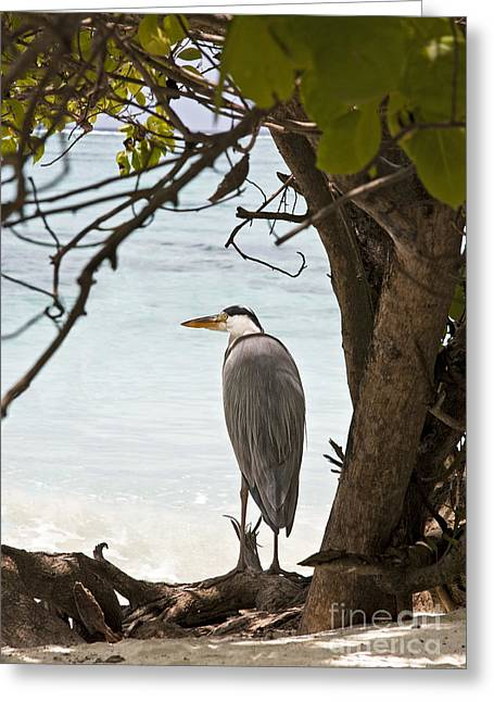 Grey Heron Greeting Cards - Heron Greeting Card by Jane Rix