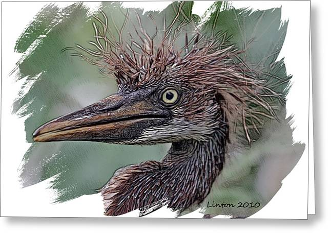 Tri-colored Heron Greeting Cards - Heron Nestling Greeting Card by Larry Linton