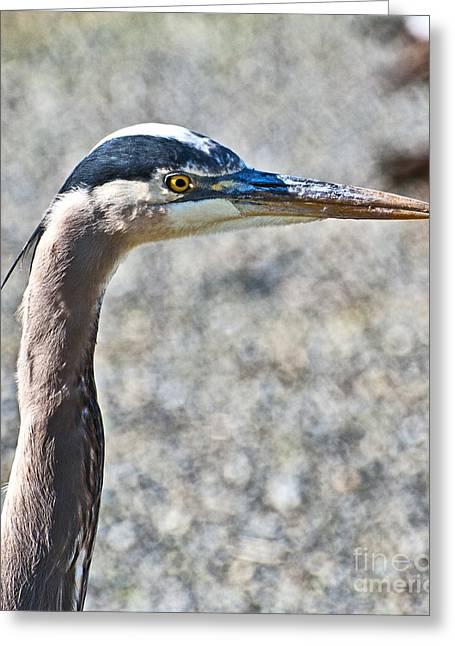 Hunting Bird Greeting Cards - Heron Portrait Greeting Card by Jim Chamberlain