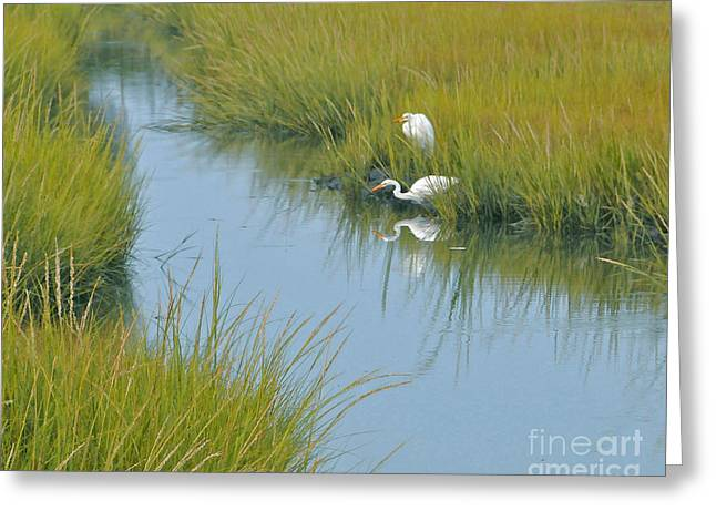 Heron Reflections Greeting Card by Cindy Lee Longhini