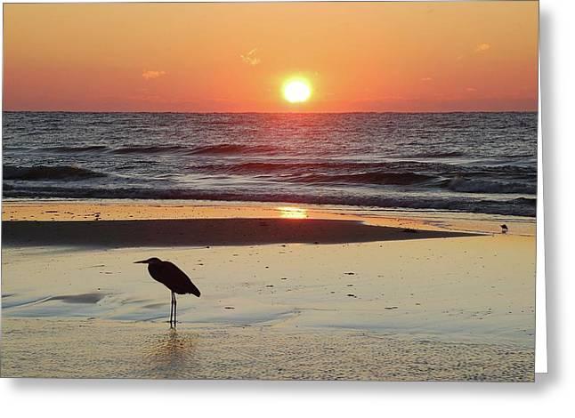 Crimson Tide Greeting Cards - Heron Watching Sunrise Greeting Card by Michael Thomas