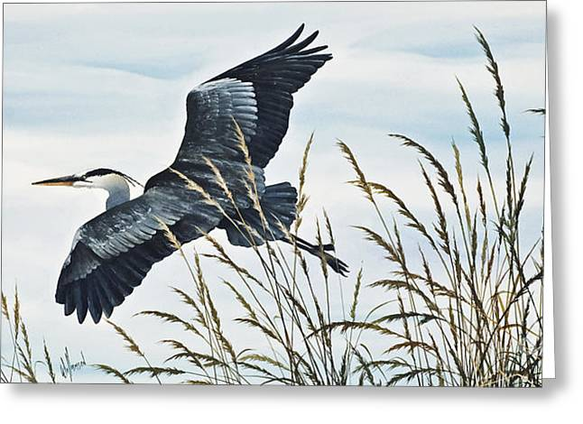 Wildlife Greeting Cards Greeting Cards - Herons Flight Greeting Card by James Williamson
