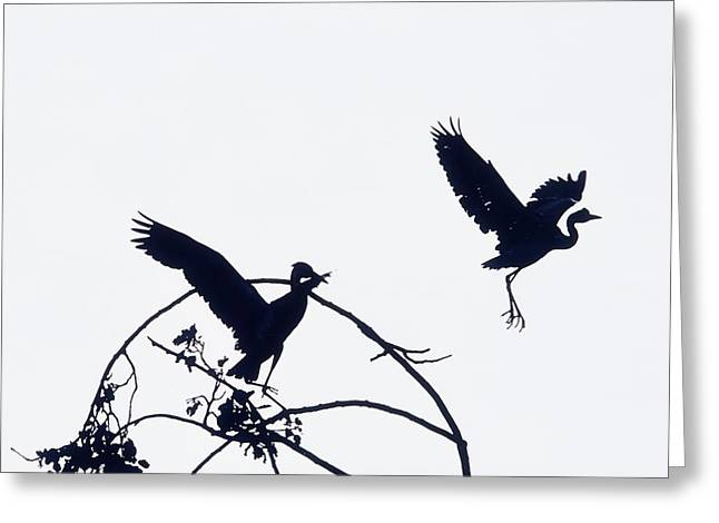 Aquatic Bird Greeting Cards - Herons In Flight Greeting Card by The Irish Image Collection