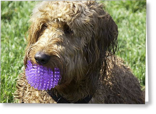 Wet Dogs Greeting Cards - Hes The Boy Greeting Card by Madeline Ellis