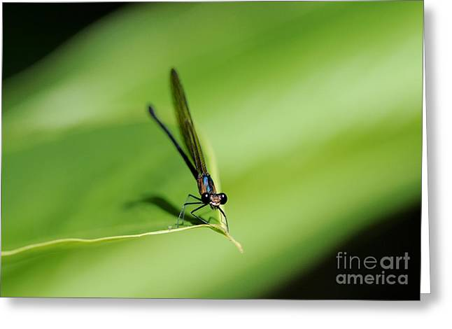Damselfly Greeting Cards - Hey You.. Greeting Card by Nina Stavlund