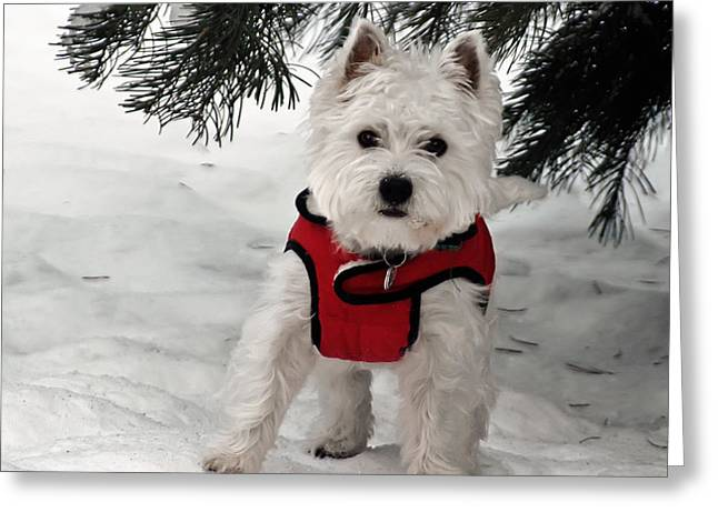 Dog In Snow Greeting Cards - Hi There  Greeting Card by Geraldine Alexander