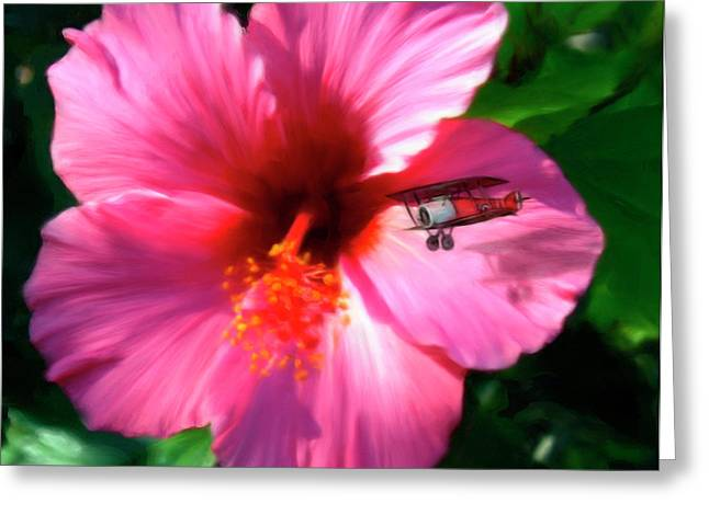 Airplane Greeting Cards - Hibiscus Fly-By Greeting Card by Snake Jagger