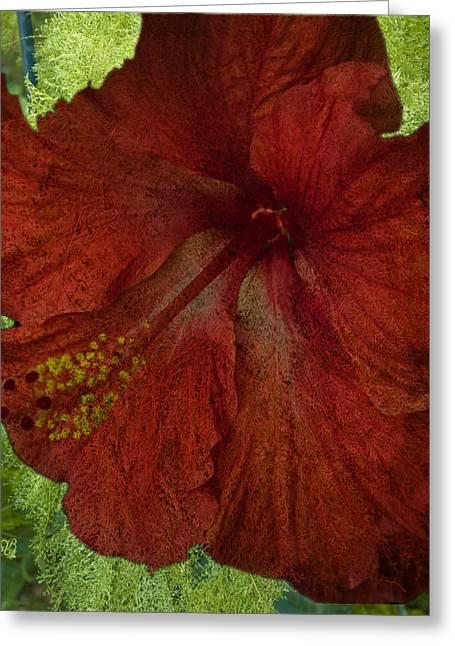 Hibiscus Plus Fern Greeting Card by Barbara Middleton