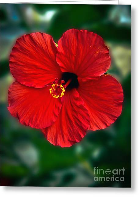 Haybale Greeting Cards - Hibiscus Greeting Card by Robert Bales