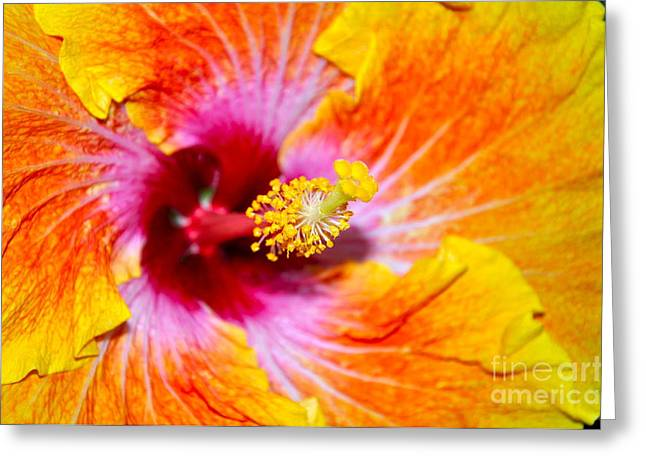 Floral Photographs Pyrography Greeting Cards - Hibiscus  Greeting Card by Sandra Benentt