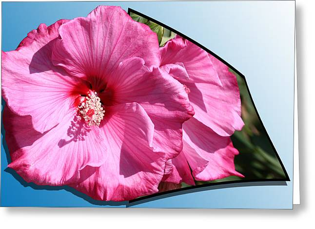 Out Of Frame Greeting Cards - Hibiscus Greeting Card by Shane Bechler