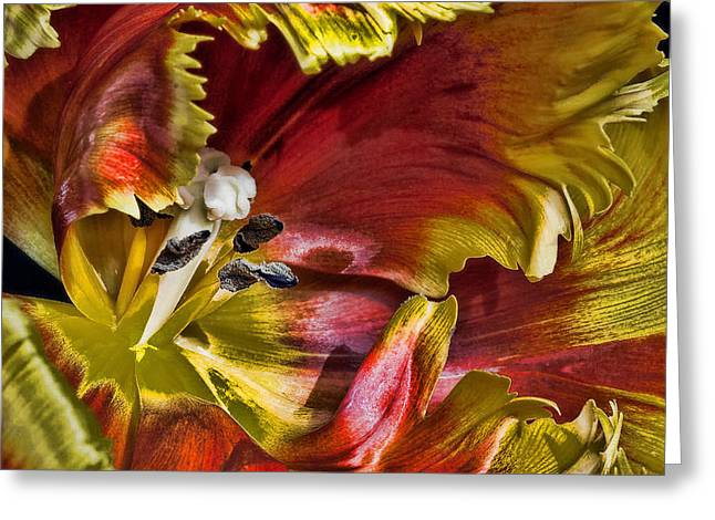 Flower Stamen Greeting Cards - Hibiscus Spice Greeting Card by Joetta West