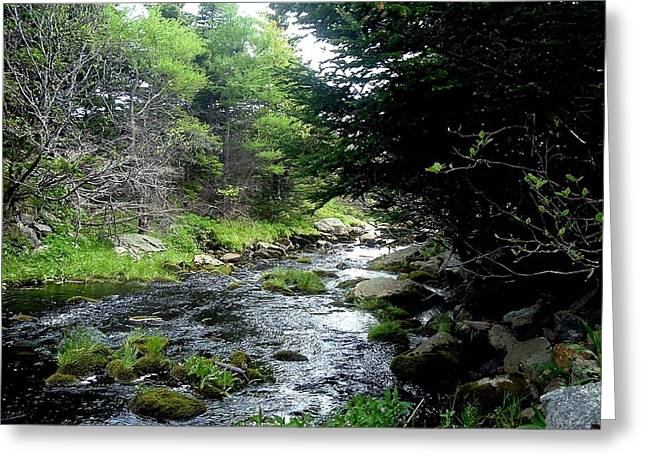 Babbling Greeting Cards - Hidden Brook Greeting Card by Barbara Griffin