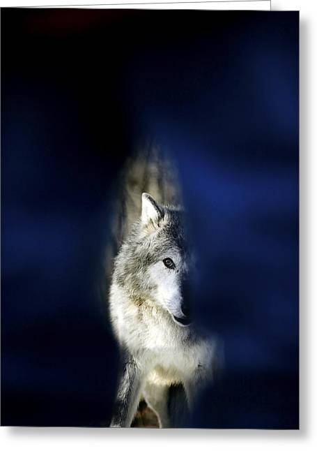 Hidden Image Of Wolf Greeting Card by Richard Wear