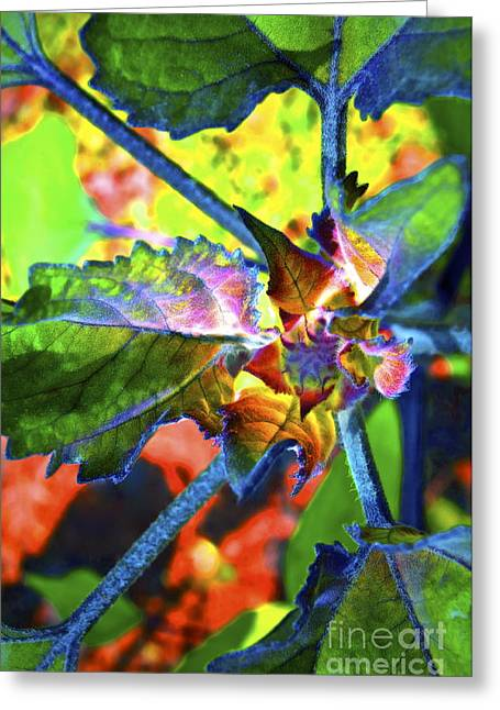 Hidden In Color Greeting Card by Gwyn Newcombe