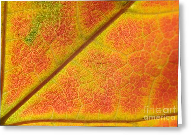 Turning Leaves Greeting Cards - Hidden Mosaic Greeting Card by Luke Moore