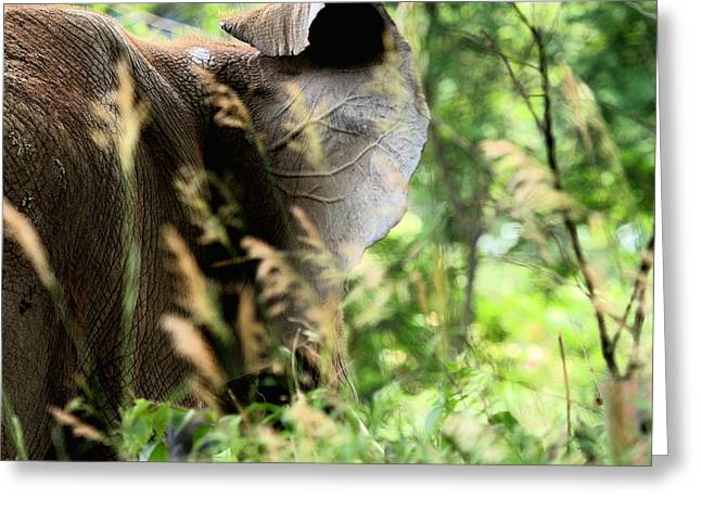 Elephant In The Room Greeting Cards - Hidden Patterns Blending In Greeting Card by Angela Rath