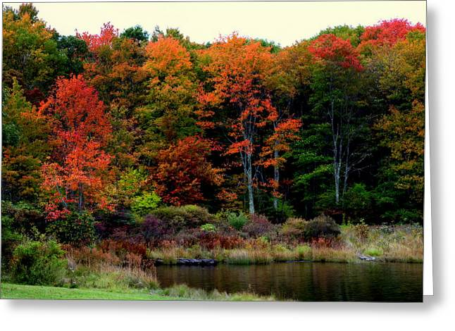 Mountaintop. Trees Greeting Cards - Hidden Valley Lake Greeting Card by Karen Wiles
