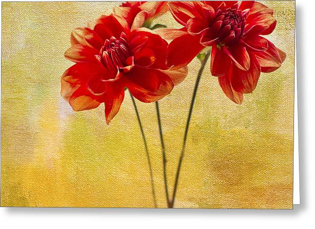 Dahlias Greeting Cards - Hiding Greeting Card by Rebecca Cozart