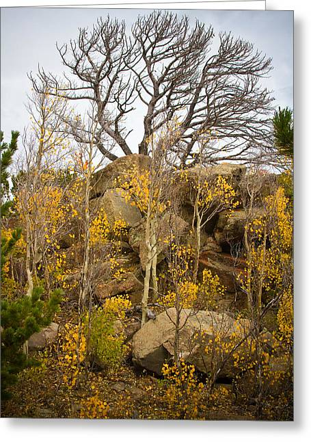 Framed. Giclee Greeting Cards - High Country Autumn View Greeting Card by James BO  Insogna