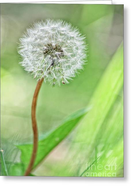 Phantasie Greeting Cards - High Key Pusteblume Greeting Card by Tanja Riedel