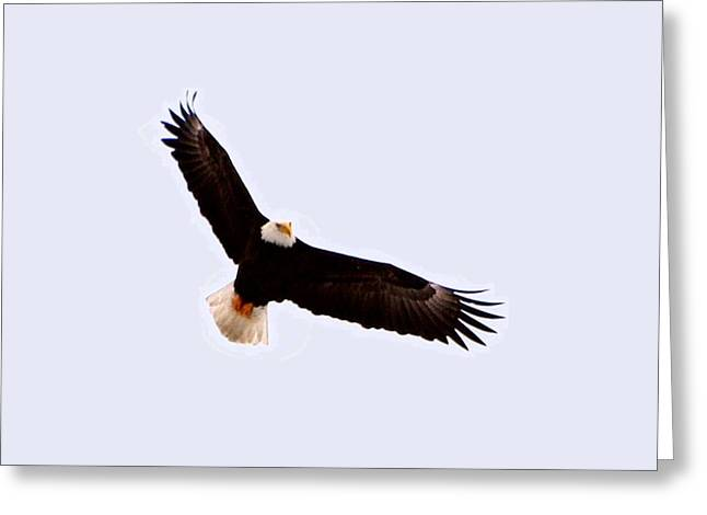 Eagle Greeting Cards - High Ruler Greeting Card by Don Mann
