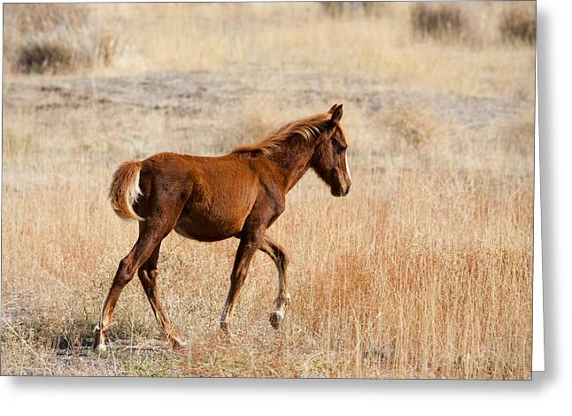 Wild Horse Greeting Cards - High Stepping Greeting Card by Mike  Dawson