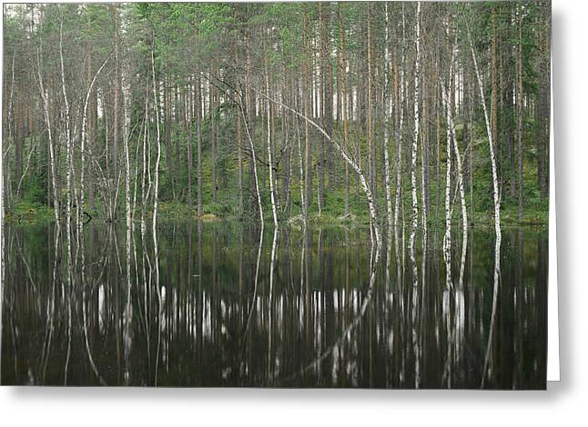 High Waters In A Forest Of Evergreens Greeting Card by Mattias Klum