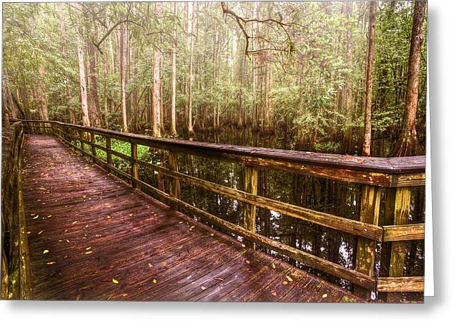 Sunset Posters Greeting Cards - Highlands Hammock Greeting Card by Debra and Dave Vanderlaan