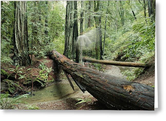 Hiker Moving Over A Fallen Redwood Tree Greeting Card by Rich Reid