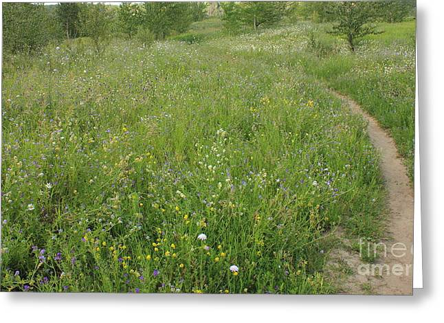 Alberta Greeting Cards - Hiking Trail through WIldflowers Greeting Card by Jim Sauchyn