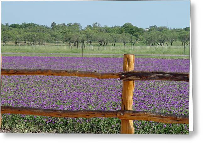 Wildseed Greeting Cards - Hill Country Roadside Tuber Vervain Greeting Card by Elizabeth Sullivan
