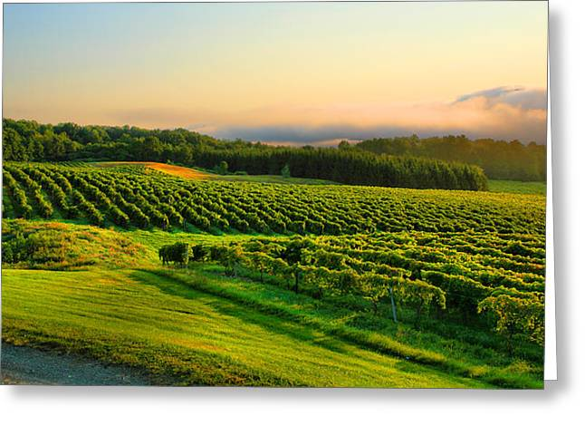 Keuka Greeting Cards - Hill-Top Vineyard Greeting Card by Steven Ainsworth