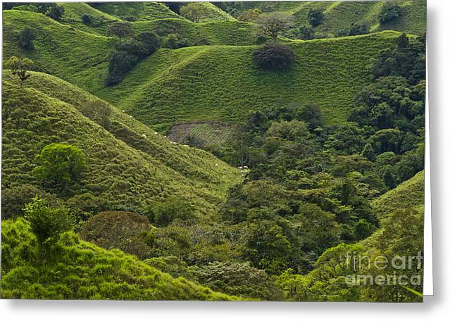 Cultivation Greeting Cards - Hills of Caizan 2 Greeting Card by Heiko Koehrer-Wagner