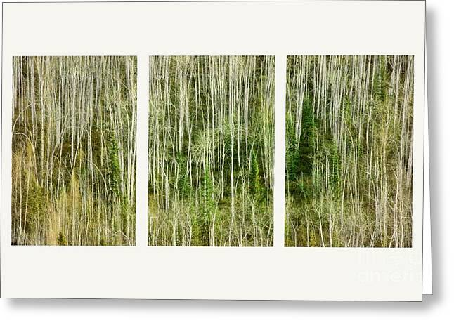 Looking Out Side Greeting Cards - Hillside Forest Greeting Card by Priska Wettstein
