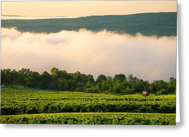 Seasonal Prints Rural Prints Greeting Cards - Hillside Vineyard II Greeting Card by Steven Ainsworth