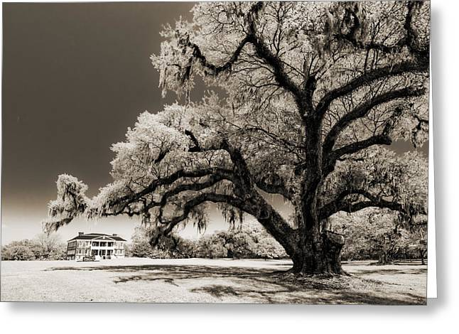 Hall Digital Art Greeting Cards - Historic Drayton Hall in Charleston South Carolina Live Oak Tree Greeting Card by Dustin K Ryan