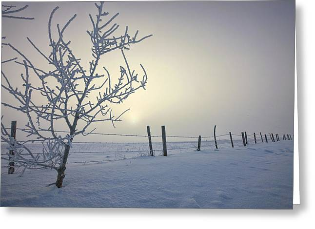 Barbed Wire Fences Greeting Cards - Hoar Frost Covering Trees And Barbed Greeting Card by Dan Jurak