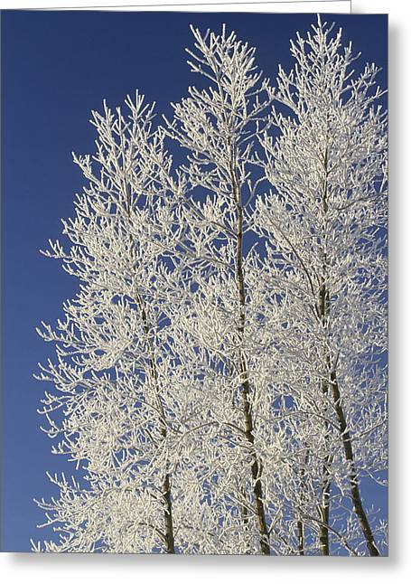 Cold Day Greeting Cards - Hoar Frost On Trees, Milton, Prince Greeting Card by John Sylvester