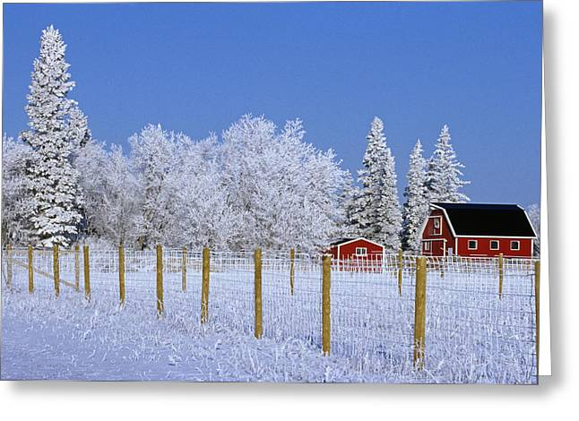 Hoarfrost On Trees Around Red Barns Greeting Card by Mike Grandmailson