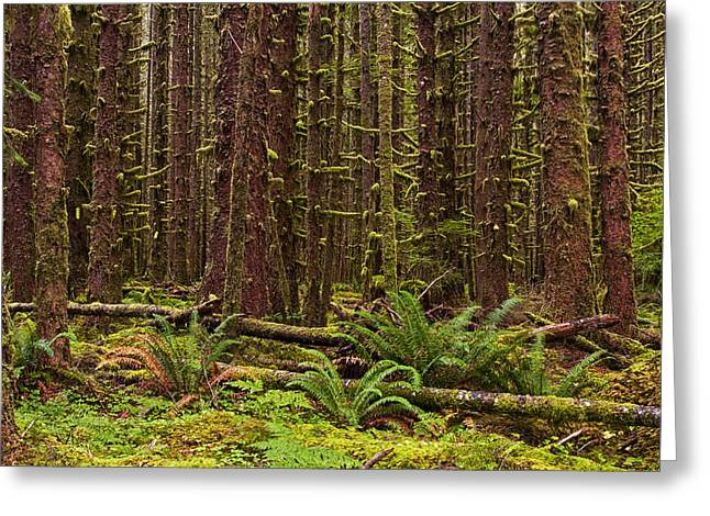 Hoh Rainforest Greeting Card by Mark Kiver