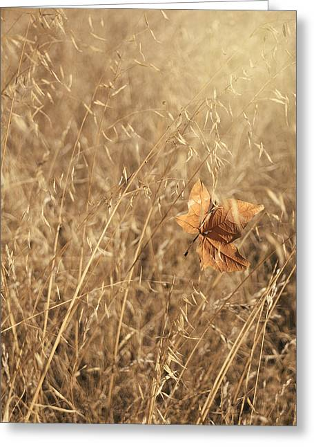 Leafs Greeting Cards - Hold Me Tenderly Greeting Card by Laurie Search