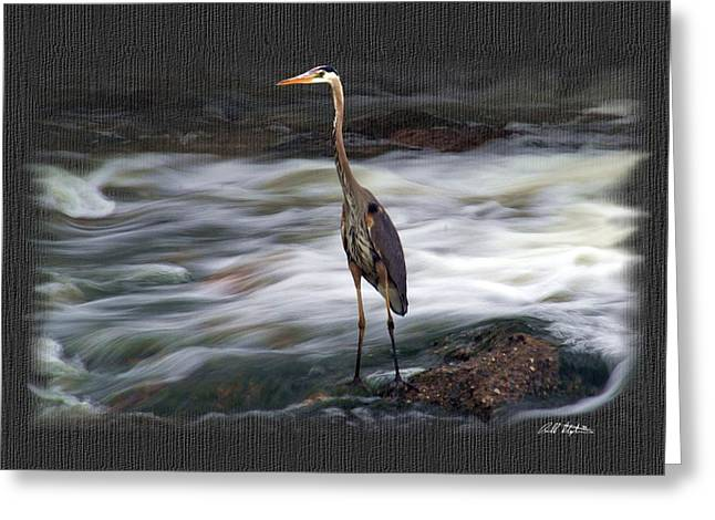 Great Birds Mixed Media Greeting Cards - Hold That Pose Greeting Card by Bill Stephens