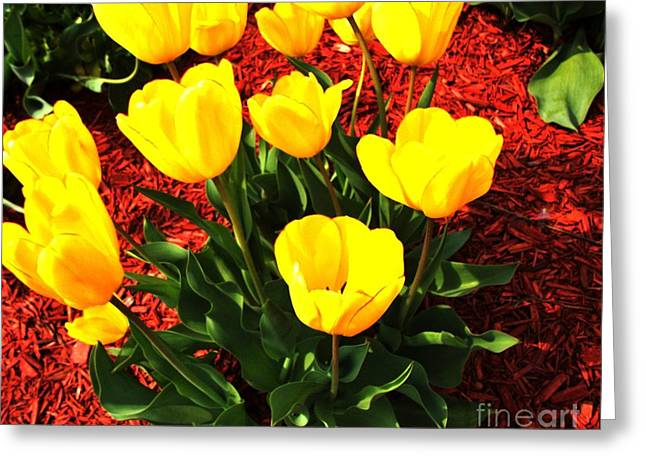 Dozen Greeting Cards - Holland Tulips Greeting Card by Marsha Heiken